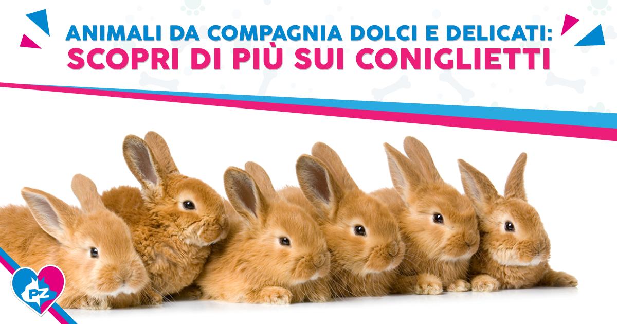 Animali da compagnia dolci e delicati: scopri di più sui coniglietti